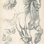 kreslenie kona postup