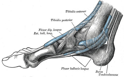 foot-10