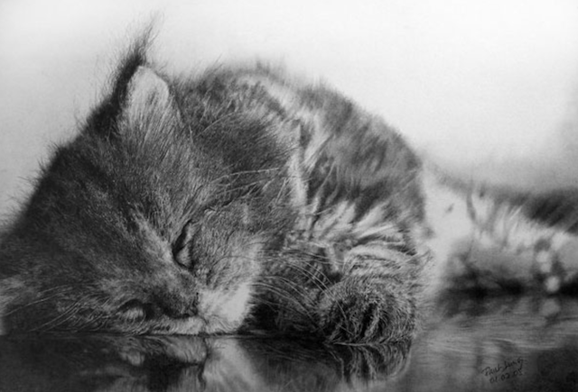 Pencil Drawings by Paul Lung
