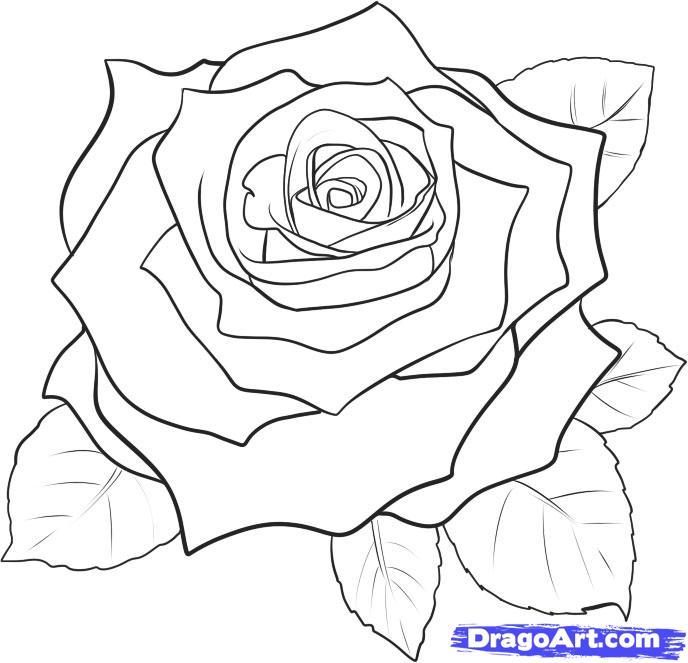 ruža tetovanie postup kresby