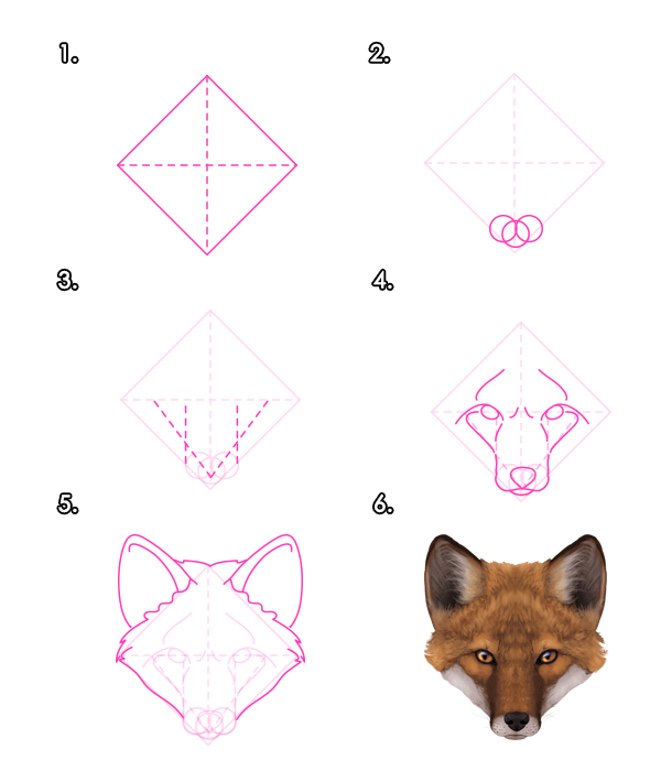 howtodrawfoxes-2-3-red-fox-head-front