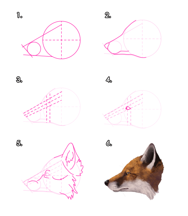 howtodrawfoxes-2-3-red-fox-head-profile