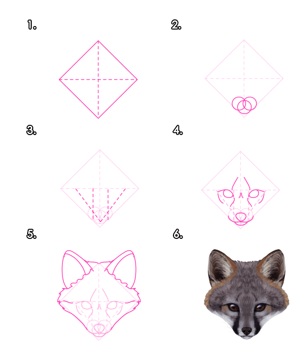 howtodrawfoxes-3-3-gray-fox-head-front