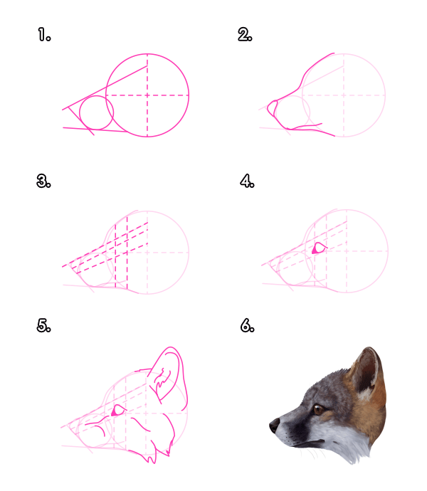 howtodrawfoxes-3-3-gray-fox-head-profile