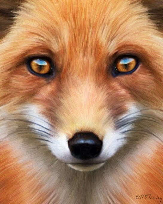 red-fox-facts-and-information-painting-20