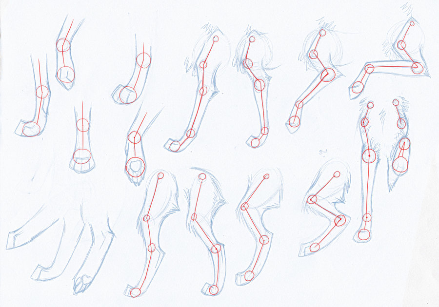 How_to_Draw_Wolves__Arms_Legs_by_Kimai