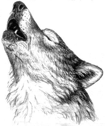 Howling_Wolf_head_by_The_Restless_Dead