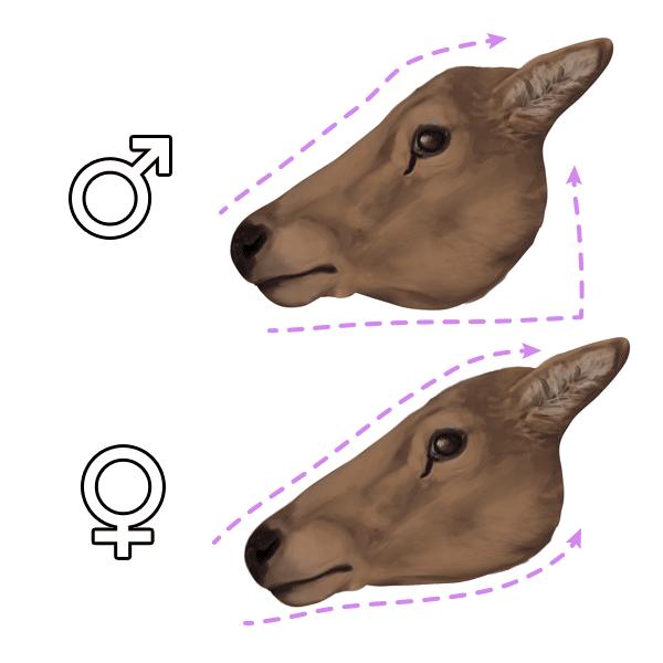 sko kreslit jelena