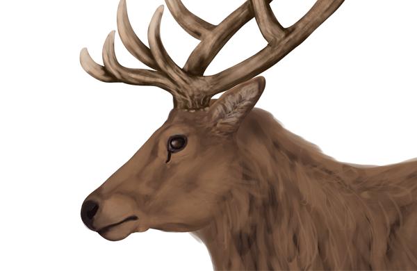 kreslenie jelena navod