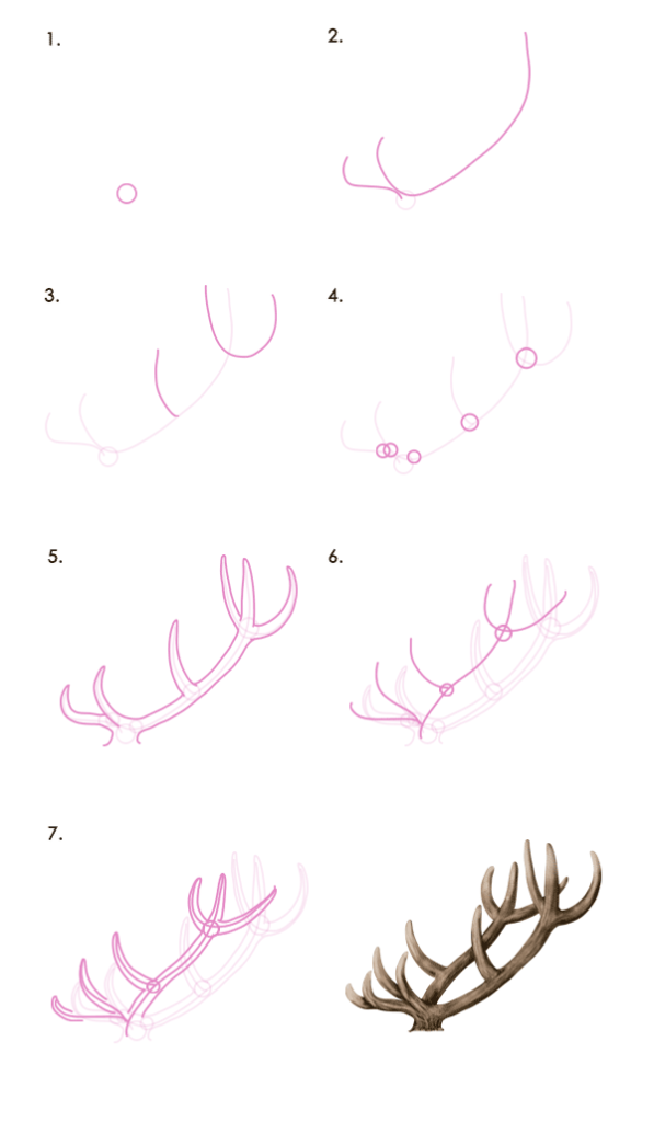 drawingdeer-7-1-red-deer-antlers