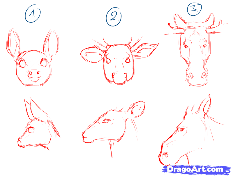 how-to-draw-deer-drawing-deer-step-3_1_000000104063_5