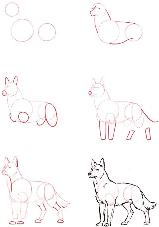 Ako Kreslit Vlka Kreslenie Sk