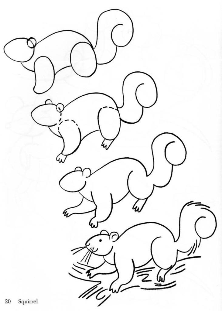 kreslenie vevericky navod