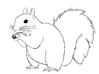 Draw Squirrel (8)
