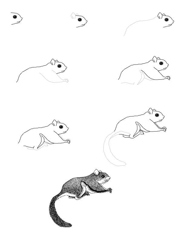kreslenie zvierat