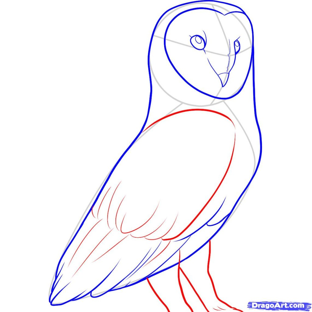 drawing-owlstep-9-how-to-draw-a-barn-owl-cags7kwv