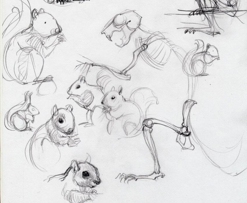 nauc sa kreslit vevericku