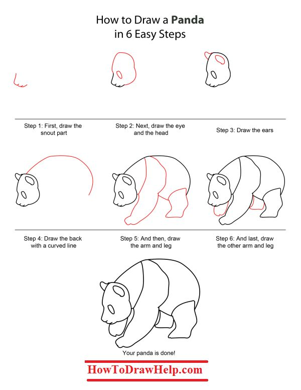 kreslenie pandy