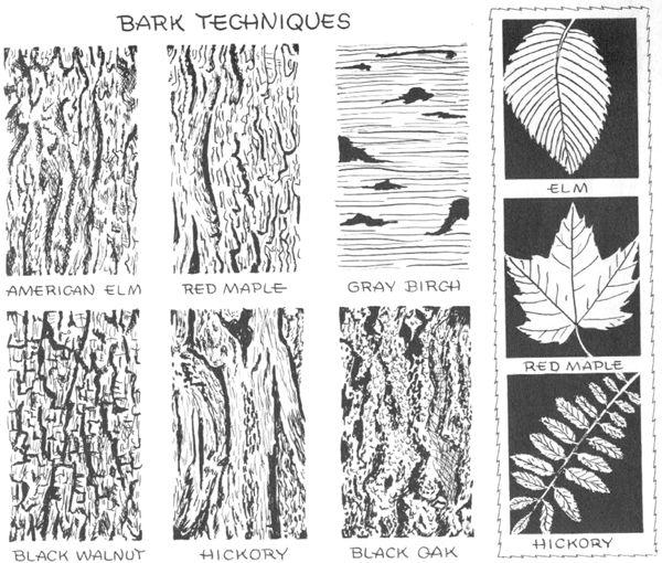 ako kreslit koru stromu