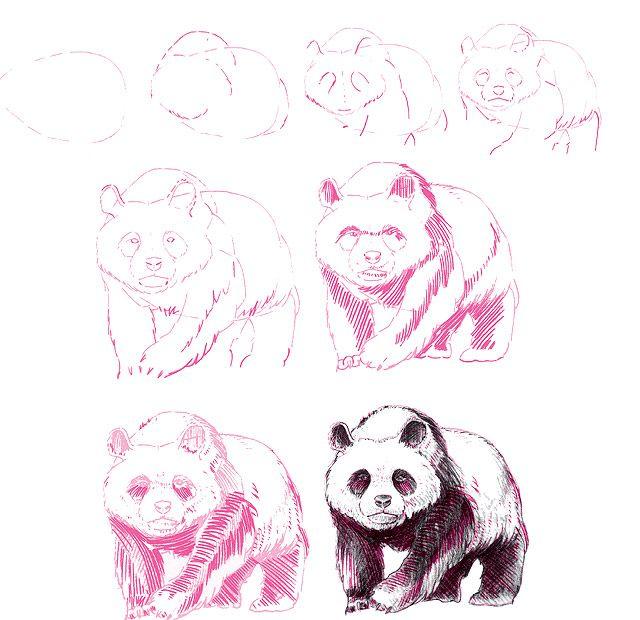 kreslenie pandy tutuorial